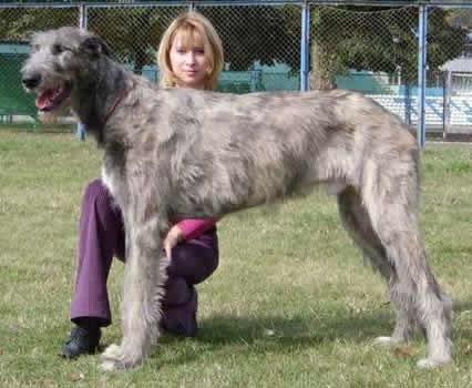 Pets inform лучшие собаки украины